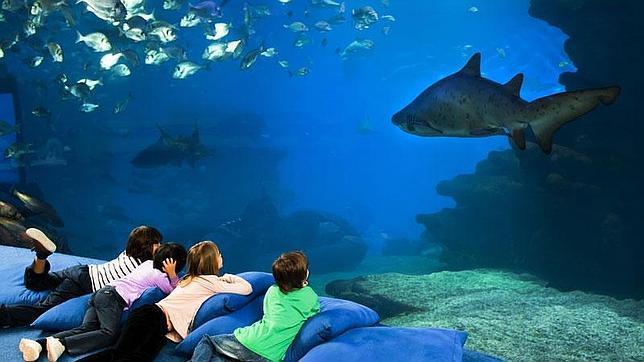 canguro-palma-aquarium--644x362
