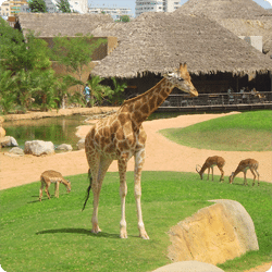 El zoo del Bioparc
