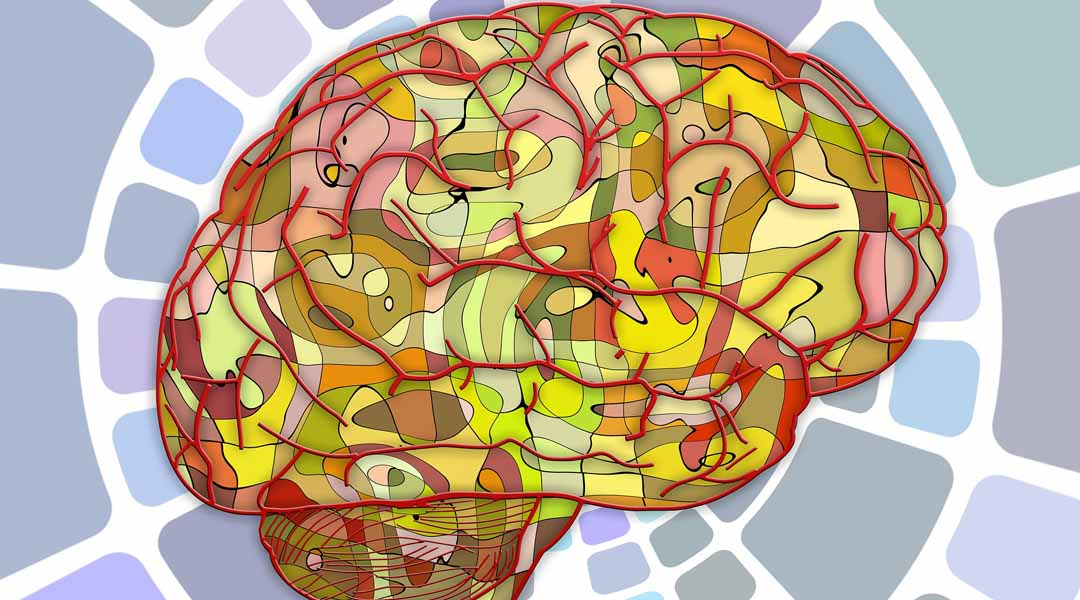 Leyendo el cerebro desde Valencia