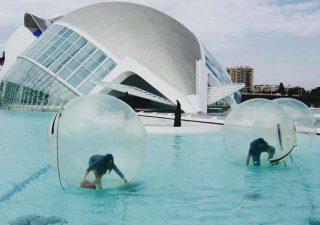 ¡Al agua, patos! Diversión acuática en l'Oceanogràfic