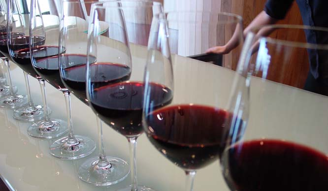 cata-vinos-11052017