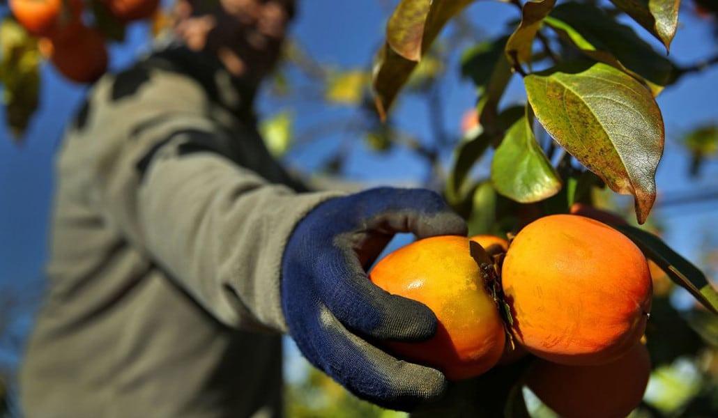Foto: agriculturers.com