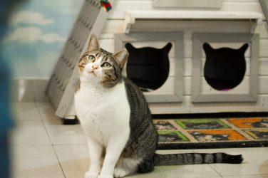 passatge dels gats valencia