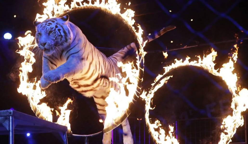 circos valencia animales